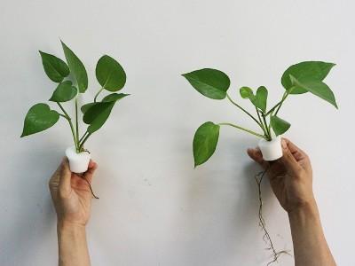 无土栽培种植海绵
